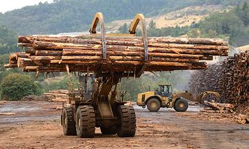 markets-timber-logging.jpg